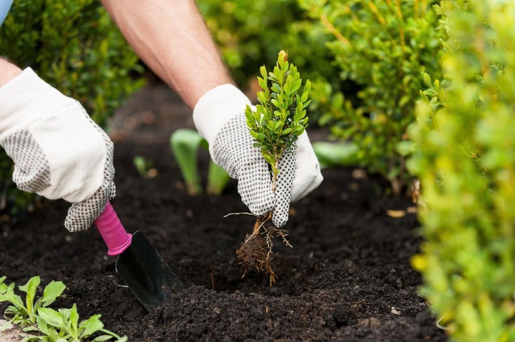 Садовая дорожка из подручного материала своими руками